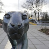Der Panther im Inselbad