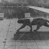 Foto LT 1977 Panther an der Kette